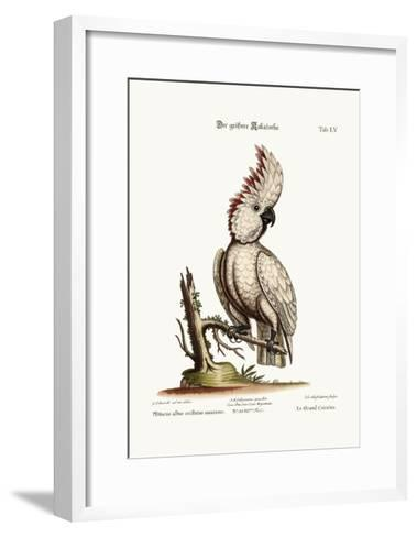 The Greater Cockatoo, 1749-73-George Edwards-Framed Art Print