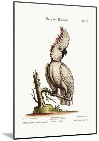 The Greater Cockatoo, 1749-73-George Edwards-Mounted Giclee Print