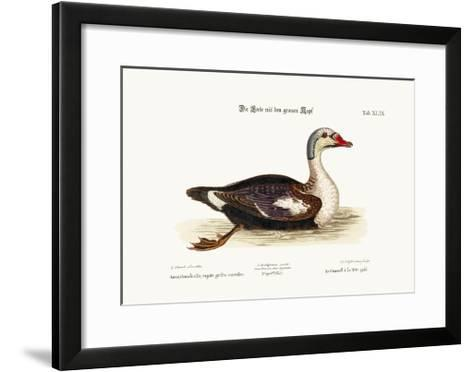 The Grey-Headed Duck, 1749-73-George Edwards-Framed Art Print