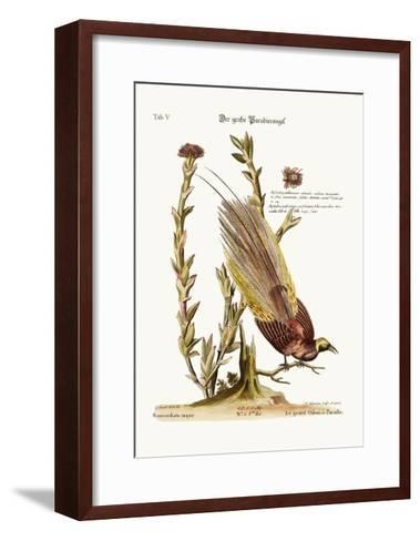The Greater Bird of Paradise, 1749-73-George Edwards-Framed Art Print