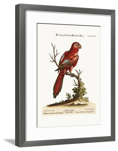 The Long-Tailed Scarlet Lory, 1749-73-George Edwards-Framed Art Print