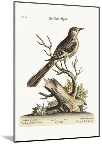The Lesser Mock-Bird, 1749-73-George Edwards-Mounted Giclee Print