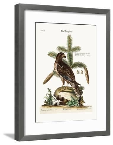 The Ring-Tailed Hawk, 1749-73-George Edwards-Framed Art Print
