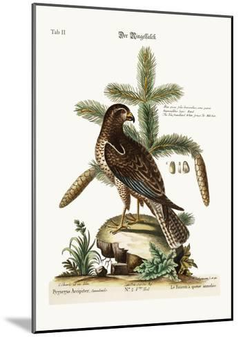 The Ring-Tailed Hawk, 1749-73-George Edwards-Mounted Giclee Print