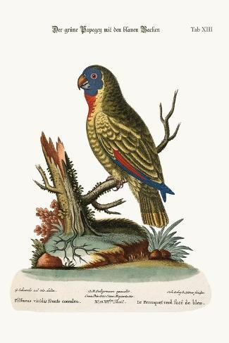 The Blue-Faced Green Parrot, 1749-73-George Edwards-Stretched Canvas Print
