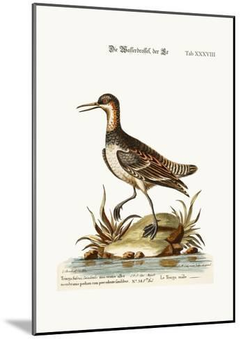 The Cock Coot-Footed Tringa, 1749-73-George Edwards-Mounted Giclee Print