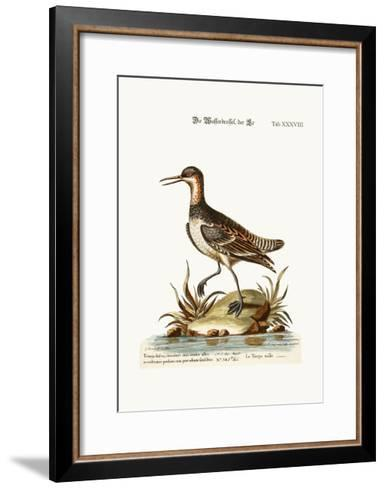 The Cock Coot-Footed Tringa, 1749-73-George Edwards-Framed Art Print