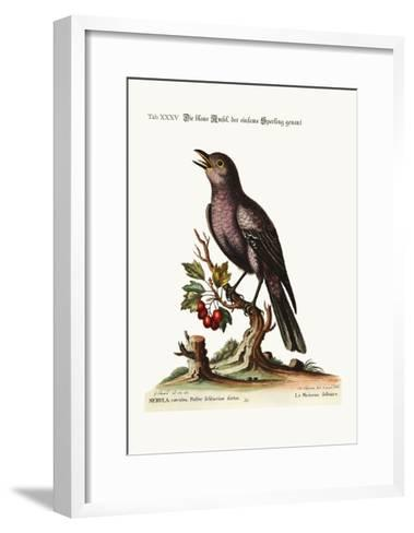 The Solitary Sparrow, 1749-73-George Edwards-Framed Art Print