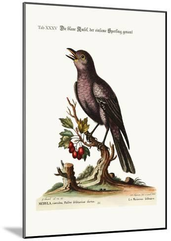 The Solitary Sparrow, 1749-73-George Edwards-Mounted Giclee Print