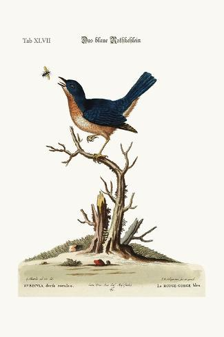 The Blue Red-Breast, 1749-73-George Edwards-Stretched Canvas Print