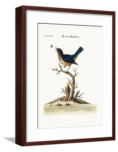 The Blue Red-Breast, 1749-73-George Edwards-Framed Art Print