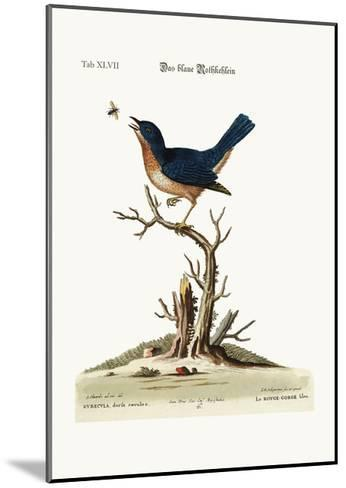 The Blue Red-Breast, 1749-73-George Edwards-Mounted Giclee Print