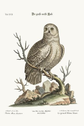 The Great White Owl, 1749-73-George Edwards-Stretched Canvas Print