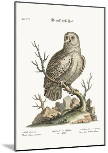 The Great White Owl, 1749-73-George Edwards-Mounted Giclee Print