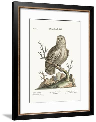 The Great White Owl, 1749-73-George Edwards-Framed Art Print