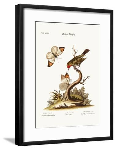 The Green Goldfinch, 1749-73-George Edwards-Framed Art Print