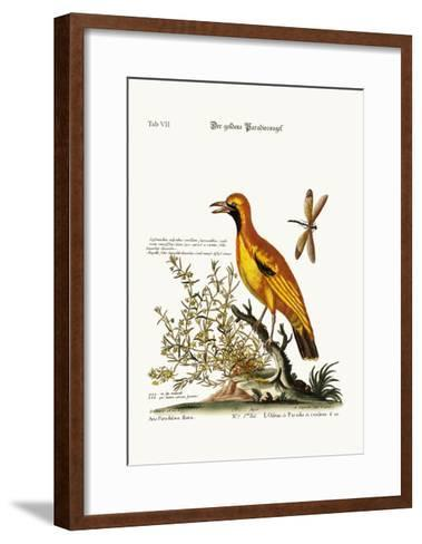 The Golden Bird of Paradise, 1749-73-George Edwards-Framed Art Print