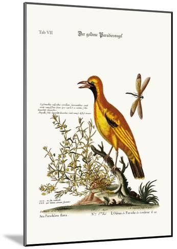 The Golden Bird of Paradise, 1749-73-George Edwards-Mounted Giclee Print