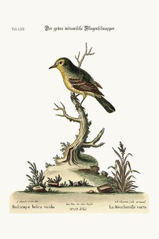 The Green Indian Flycatcher, 1749-73-George Edwards-Stretched Canvas Print