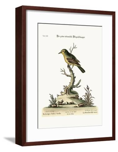 The Green Indian Flycatcher, 1749-73-George Edwards-Framed Art Print