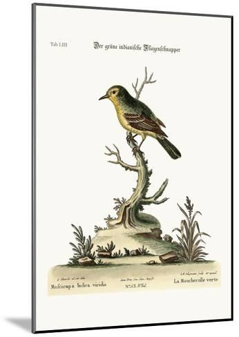 The Green Indian Flycatcher, 1749-73-George Edwards-Mounted Giclee Print