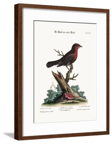 The Red-Breasted Black-Bird, 1749-73-George Edwards-Framed Art Print