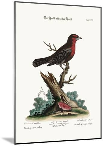 The Red-Breasted Black-Bird, 1749-73-George Edwards-Mounted Giclee Print