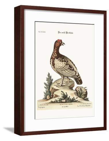 The White Partridge, 1749-73-George Edwards-Framed Art Print