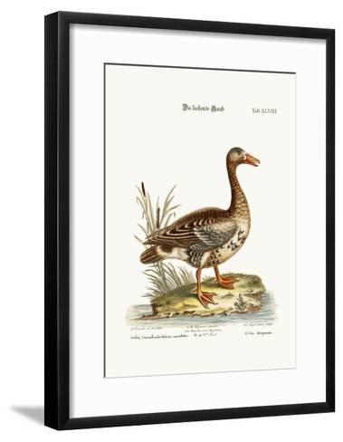 The Laughing Goose, 1749-73-George Edwards-Framed Art Print