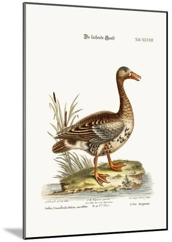 The Laughing Goose, 1749-73-George Edwards-Mounted Giclee Print
