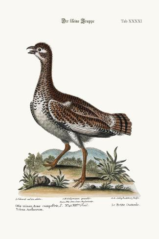 The Little Bustard, 1749-73-George Edwards-Stretched Canvas Print