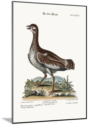 The Little Bustard, 1749-73-George Edwards-Mounted Giclee Print