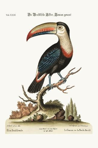 The Toucan or Brasilian Pye, 1749-73-George Edwards-Stretched Canvas Print