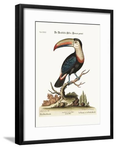 The Toucan or Brasilian Pye, 1749-73-George Edwards-Framed Art Print