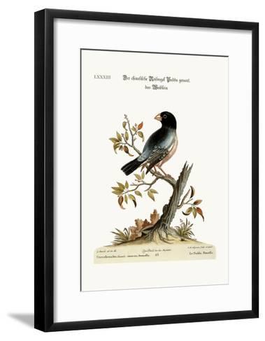 The Hen Padda or Rice-Bird, 1749-73-George Edwards-Framed Art Print