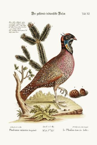 The Horned Indian Pheasant, 1749-73-George Edwards-Stretched Canvas Print