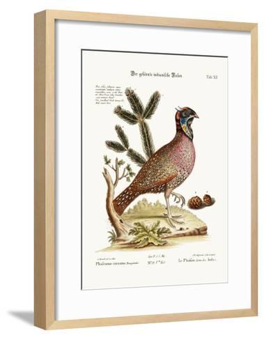 The Horned Indian Pheasant, 1749-73-George Edwards-Framed Art Print