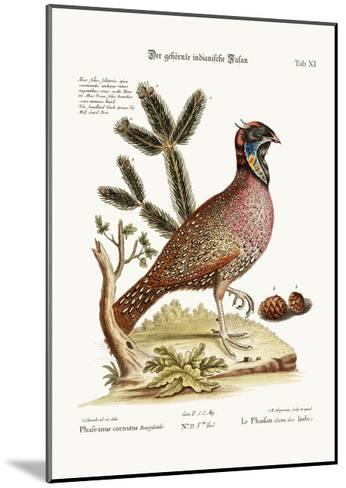 The Horned Indian Pheasant, 1749-73-George Edwards-Mounted Giclee Print