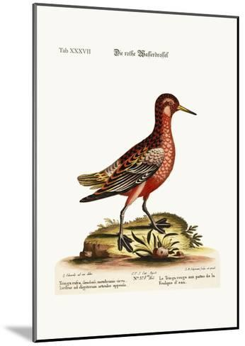 The Red Coot-Footed Tringa, 1749-73-George Edwards-Mounted Giclee Print