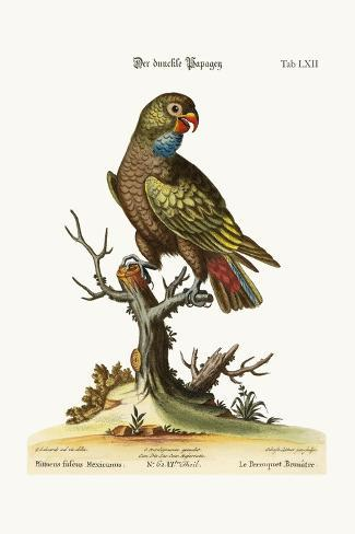 The Dusky Parrot, 1749-73-George Edwards-Stretched Canvas Print