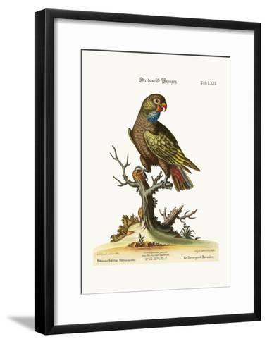 The Dusky Parrot, 1749-73-George Edwards-Framed Art Print
