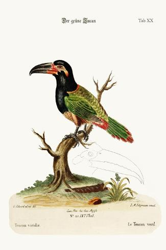 The Green Toucan, 1749-73-George Edwards-Stretched Canvas Print