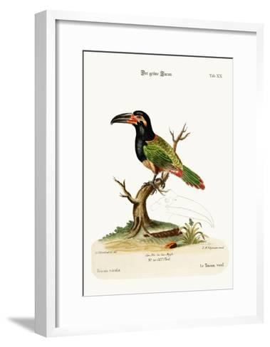 The Green Toucan, 1749-73-George Edwards-Framed Art Print