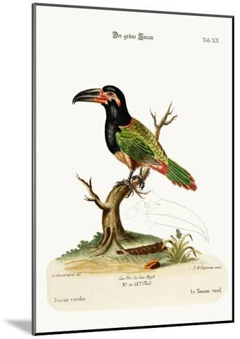 The Green Toucan, 1749-73-George Edwards-Mounted Giclee Print