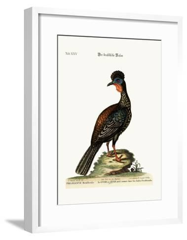 The Quan or Guan, 1749-73-George Edwards-Framed Art Print