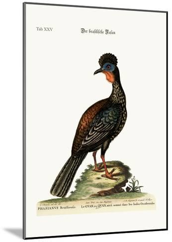 The Quan or Guan, 1749-73-George Edwards-Mounted Giclee Print