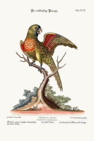 The Red-Breasted Parrakeet, 1749-73-George Edwards-Stretched Canvas Print