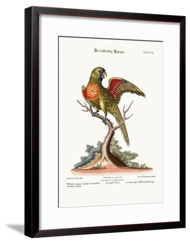 The Red-Breasted Parrakeet, 1749-73-George Edwards-Framed Art Print