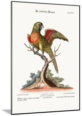 The Red-Breasted Parrakeet, 1749-73-George Edwards-Mounted Giclee Print