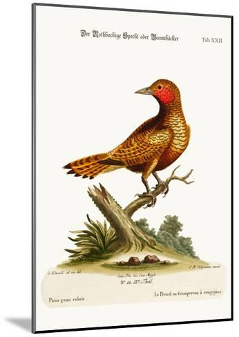 The Red-Cheeked Woodpecker, 1749-73-George Edwards-Mounted Giclee Print